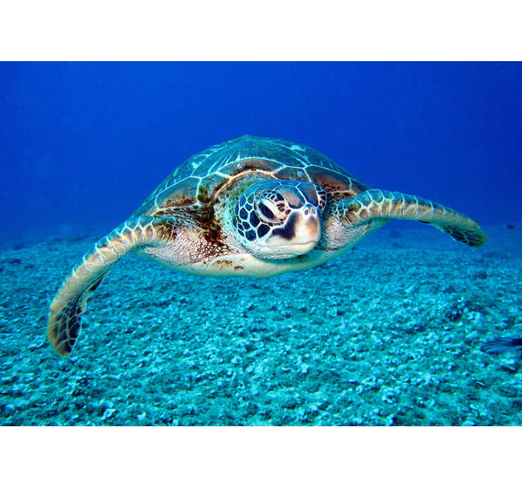 TenStickers. Hawksbill sea turtle wall mural. Really beautiful sea turtle is a perfect design for your new bathroom wall murals to make that interior a stylish and interesting space! Free delivery