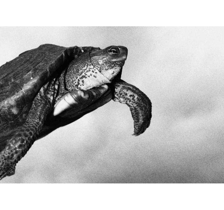 TenStickers. Photo murale animal Tortue noir et blanc. Photo murale en noir et blanc avec une tortue sera une décoration parfaite pour votre bureau. Image de haute qualité et couleurs mates. Livraison gratuite!