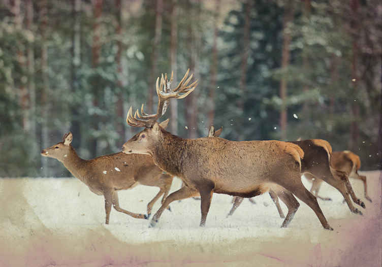 TenStickers. Deers in the forest mural wallpaper. Scenery view wall mural design of deers in the forest. An amazing design to create an amazing forest landscape view in your space.