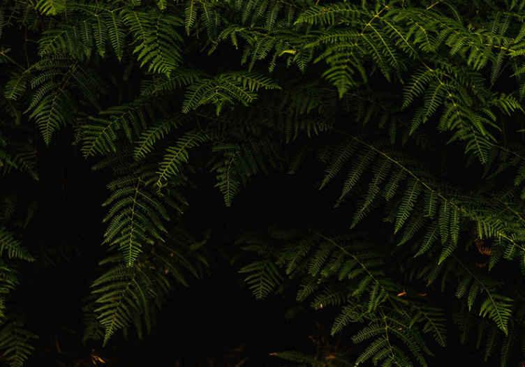 TenVinilo. Fotomural árboles hojas de helecho. ¿Buscas algo natural verde para decorar tu casa? Aquí hay un diseño de fotomural naturaleza de plantas de helecho ¡Envío gratuito!
