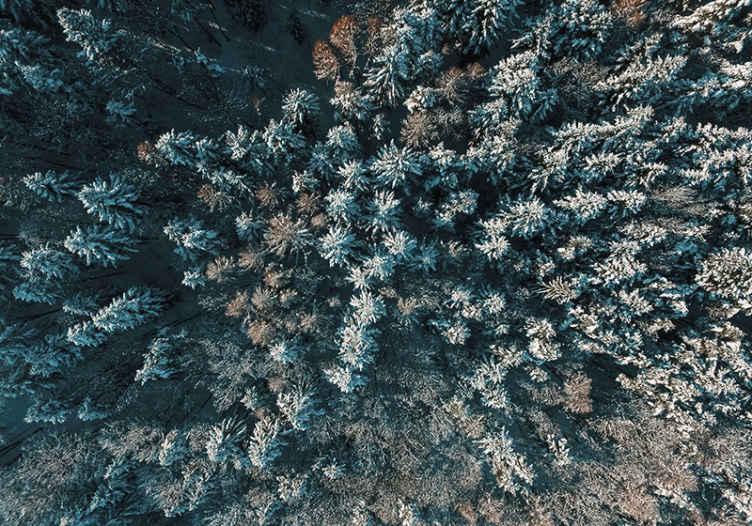 Tenstickers. Puita ylhäältä tapetti kuvalla metsä valokuvatapetti. Hanki tunne kylmässä luonnossa jäätyneiden puiden seinämaalauksella lintujen näkökulmasta! Voit tilata luonto valokuvatapetti verkkokaupastamme!
