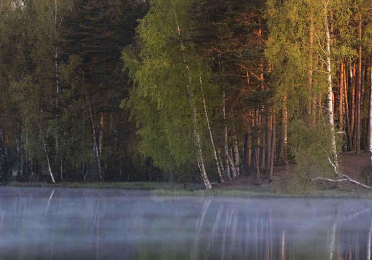 Tenstickers. Sumu tulossa järven tapetti kuvalla luonto valokuvatapetti. Puumetsävalokuvatapetti luodaksesi enemmän luonnon inspiroimaa ilmapiiriä kotona tai toimistossa. Se voidaan asentaa olohuoneeseen, makuuhuoneeseen, toimistoon jne