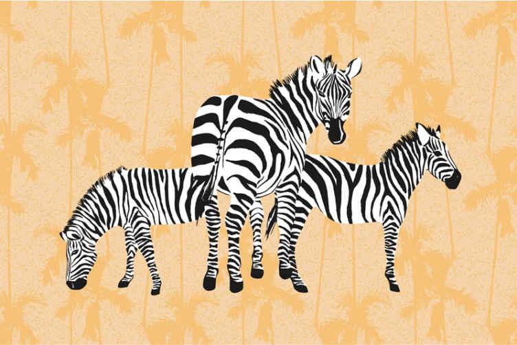 Tenstickers. Zebra a dlane nástenná tapeta. Zmeňte vzhľad svojho domova alebo ľubovoľného priestoru na stene pomocou nášho vysoko kvalitného vyrobeného zebrického zvieraťa s fotkami na stenu.