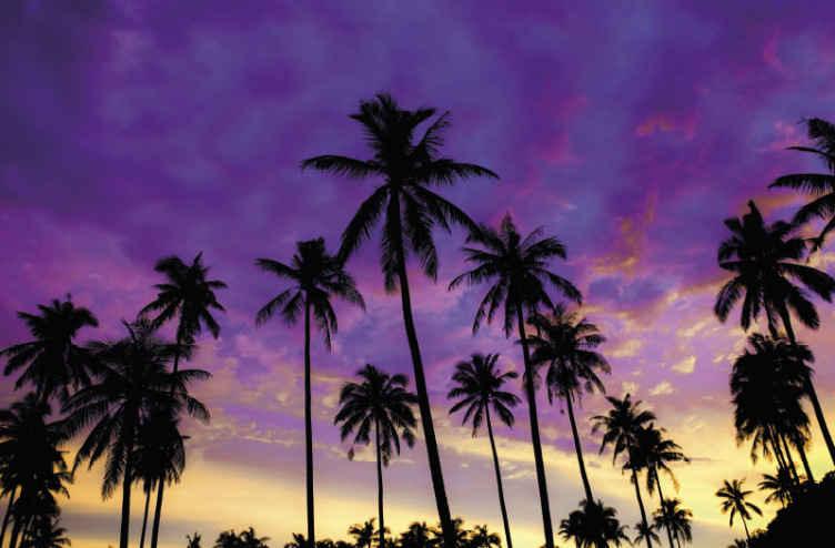 TenStickers. Silueta palmi ljubičasto drvo zidni zid. Naručite danas ovaj zidni zid sa tropskim palmama, a možete ga čak i dovesti za kućni prag u samo nekoliko dana! Kupi sada!
