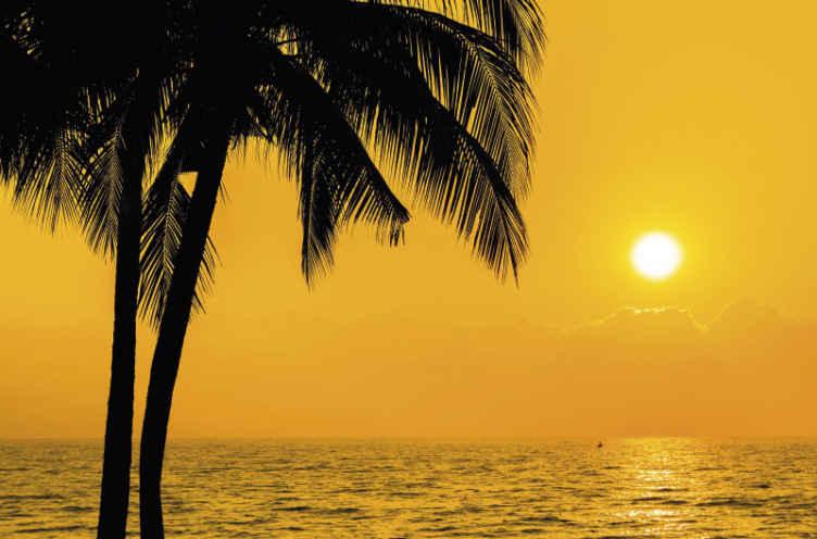 TenStickers. Fotomurais paisagistícos Lindo pôr do sol com palmeiras. Com este fotomural vinílico de paisagem de paisagem de praia, você não perderia muito da vista de um belo pôr do sol no mar com palmeiras.
