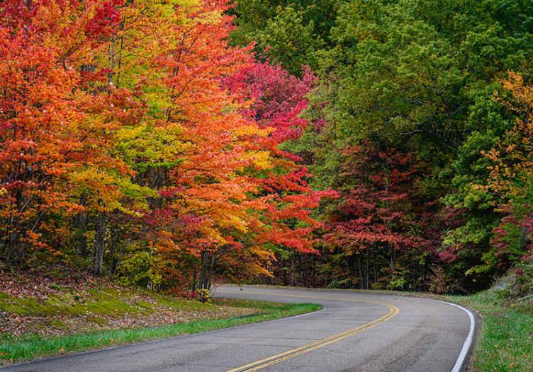 TenStickers. Cesta z rdečimi drevesi drevesna stenska stena. Zakaj ne naročite teh zelo edinstvenih fotografij za tapeta dreves za hodnik? Te pokrajinske fotografije za tapeta imajo popolnoma osupljiv pogled