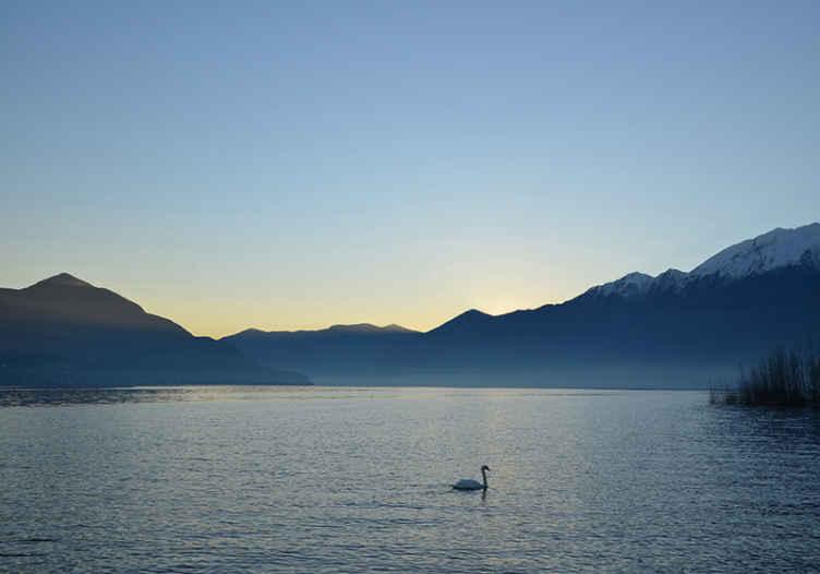 Tenstickers. Nástenné maľby na labute. ! po dlhom dni prídete domov a uvidíte skvostné jazero, keď vojdete do svojej obývačky . Dokončiť objednávku ! Donáška domov !