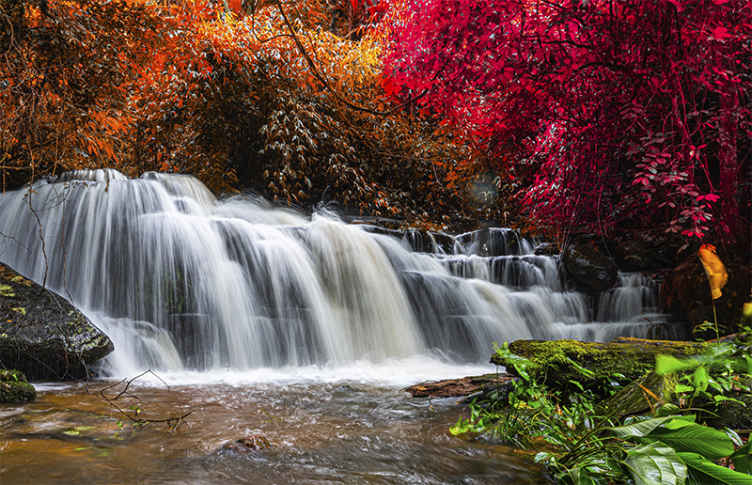 """""""Tenstickers"""". Rudens lapai ir krioklio freskos. Atnešk gamtą į savo namus naudodamas šį nuostabų krioklio sienų paveikslą! Po ilgos dienos grįžtate namo ir pamatote atogrąžų mišką savo svetainėje."""