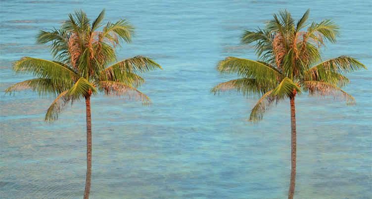 TenStickers. Fotomurale paesaggi Spiaggia con palme. Ordina subito questo prodotto murale per la parete del mare e lasciati stupire dal suo aspetto fantastico e dal design simile a una spiaggia!