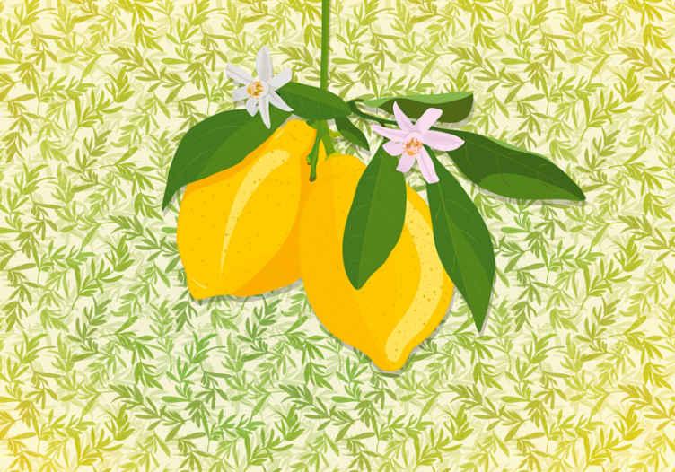 TenStickers. fototapeta z rožami limoninega drevesa. Kakšna očarljiva stenska stena za rože in sadje za dekoracijo kuhinje. Vaš prostor bi bil videti čudovito s tem izdelkom.