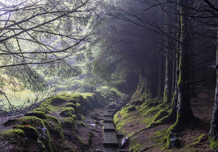 TENSTICKERS. 暗い森アイルランドの森の壁画の壁紙. この素晴らしくデザインされた風景写真の壁画であなたの家の中に自然をもたらします。何を待っていますか?今すぐ写真の壁画を注文してください!