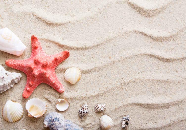 TenStickers. Hvězdice a mušle na pískových zvířecích nástěnných malbách. Fototapeta krásné hvězdice a mušle na písku zvířat. Design vypadá skutečně a velmi krásně. Vyrobeno z kvalitního materiálu a odolné.