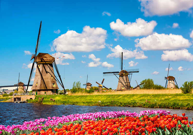 TenStickers. Fototapeta mlýny a tulipány. Podívejte se na tuto krásnou fototapetu inspirovanou ikonickými větrnými mlýny v nizozemsku s barevnými květinami a modrou oblohou. Donáška domů!