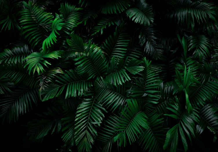 TenStickers. Zidni zid šuma tropske šume. Prekrasan prirodni zidni zid pun tropskog lišća u dubokim i bogatim zelenim bojama. Aplikacija protiv mjehurića i jednostavno uklanjanje. Naručite već danas!