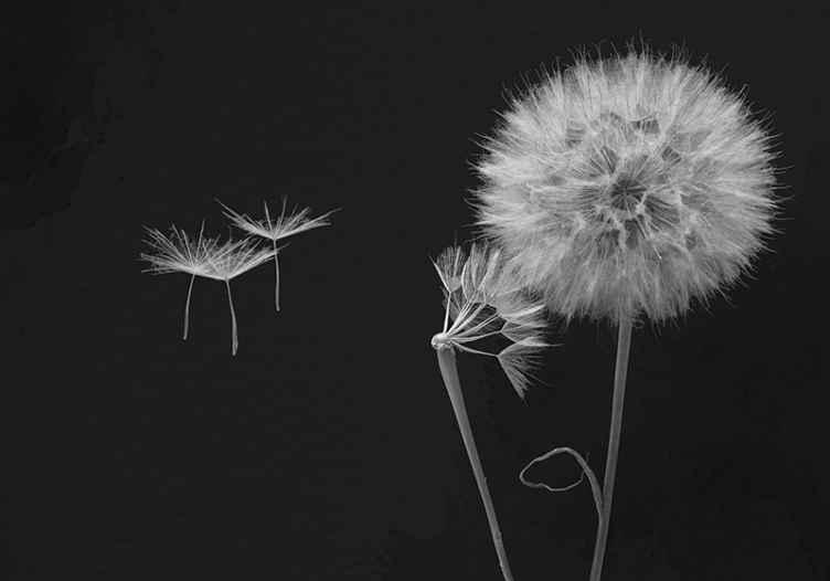 Tenstickers. Púpava hlava so semenami púpava nástenná maľba. Hľadáte rekonštrukciu svojho priestoru exotickým a elegantným nádychom? Naša originálna a vysoko kvalitná fototapeta z púpavy je tu pre vás.