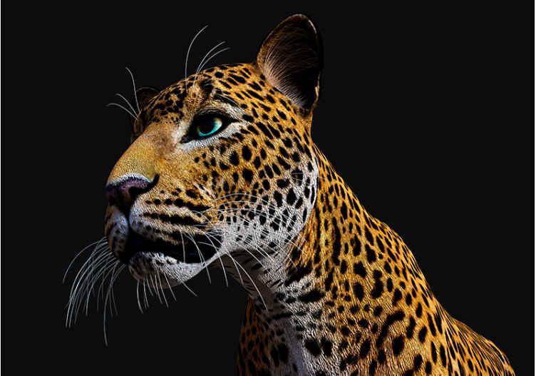 TenVinilo. Fotomural 3d Leopardo feroz 3d. Si sientes que eres un verdadero fanático de los leopardos, deberías tener este fotomural pared leopardo feroz 3d  colorido. Fácil de aplicar.