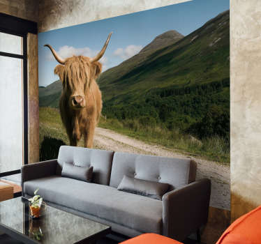Perhaps the cutest of Bristish cattle, a Scottish high lander, with its fluffy brown fur this animal wall mural is definitely a firm favourite of ours