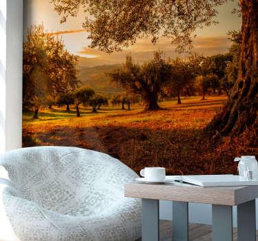 Maravilloso fotomural pared  para interior de un campo de árboles de olivares andaluces con un bonito atardecer para que decores tu casa.
