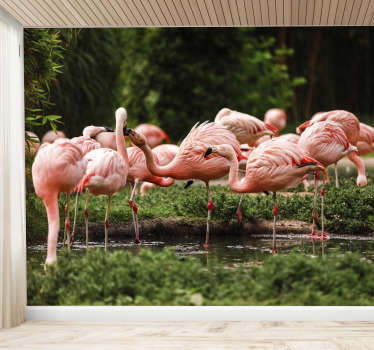 This animal photo mural shows a group of pink flamingos in the nature The great colors of this product will be the perfect decoration for you!