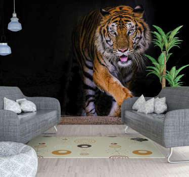 Tiger wall mural design of a fierce looking large tiger in sharp stripy brown, white and black colour. This design is easy to apply with the kit set.