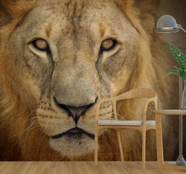 A wild lion's face animal wall mural in your dinning or living room to create a wildlife view that will beautify your home  and also exciting to watch.