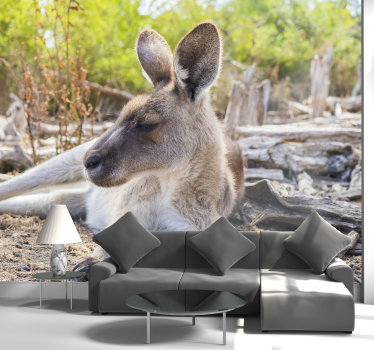 This beautiful mural of a Brown Kangaroo will look great in your living room or even in your bedroom. Buy it and you  won't regret it!