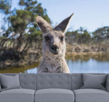 We all love kangaroos and that is why this animal wall mural is perfect for your wall above sofa or TV. High quality image without any pixels.