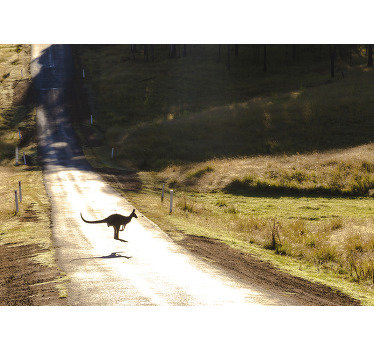 Order this animal wall mural and bring a bit of nature to your home . Jumping kangaroo through the road, somewhere in Australia is so cute.
