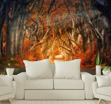 Forest photo wall mural of a forest in the beautiful autumn period on which the sunrise is depicted. Don't wait any longer and decorate your home!