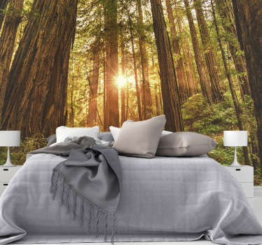 Mystical morning forest wall mural