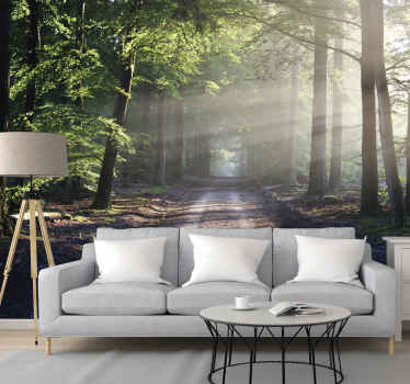Sun lit road in a forest tree wall mural