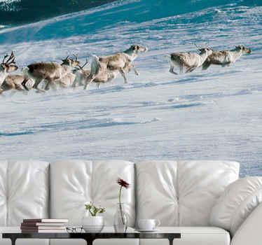 Kaunis maisema tapetti kuvalla, jossa porot juoksevat lumessa. Sopii sisustamaan olohuone, vierashuone ja toimistotila.