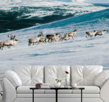 Poro kävelee lumella luonnon tapetti kuvalla sisustaa kotisi esittelemällä sitä luonnon ripaus. Helppo levittää ja kestävä.