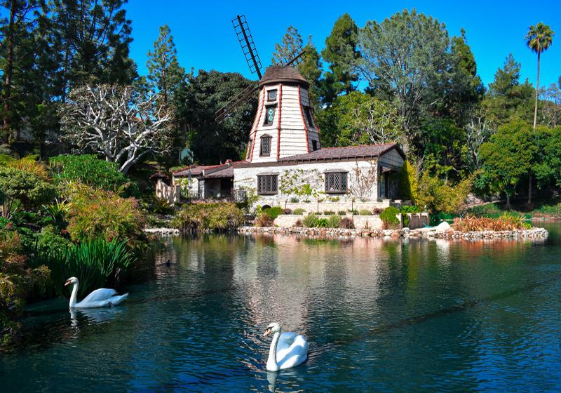 TenStickers. Fotomurais paisagistícos Dois cisnes e árvores coloridas. Belo vento vai ao lado de um pequeno lago com um cisne. Este fotomural vinílico de parede de paisagem é perfeito para os amantes da natureza e da paisagem. Entrega em domicílio disponível.