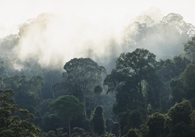 Tenstickers. Džungle pozadia prírodné nástenné maľby. Táto nádherná príroda na nástennej maľbe z hmlistej exotickej džungle spôsobí, že sa budete cítiť ako v divočine bez toho, aby ste opustili svoju posteľ. Donáška domov!