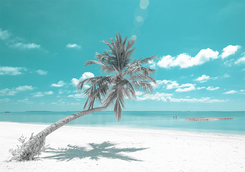 Beach With Leaning Palm Tree Sea Mural Tenstickers