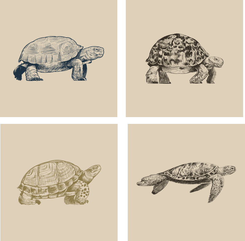 TenStickers. Turtle Drawings Beige Background Coaster Set. Look at these cool turtle drawing animal coasters! Elegant design with these fascinating animals to decorate your home perfectly!