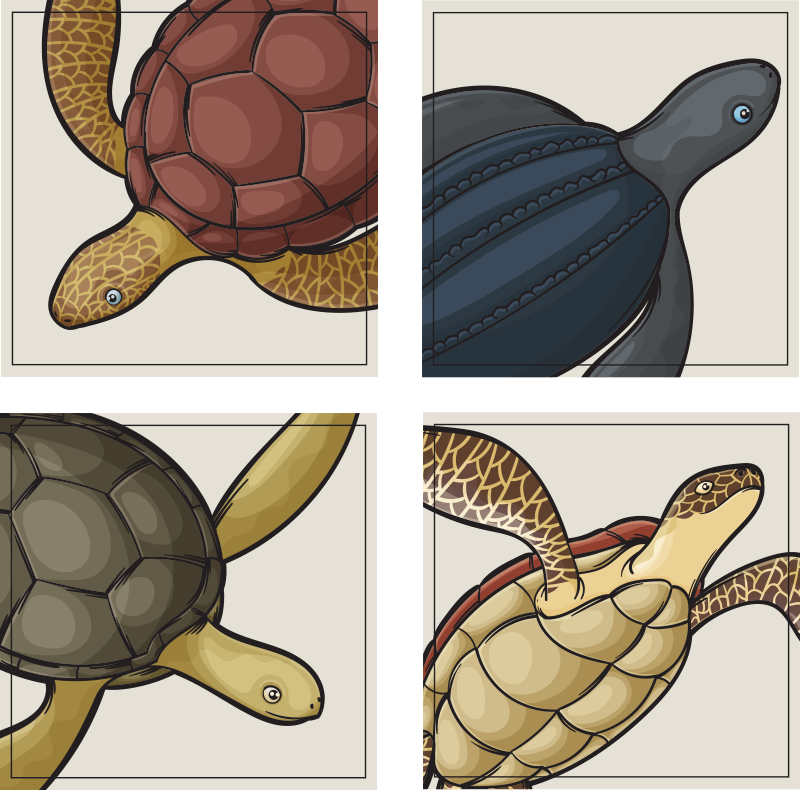 TenStickers. Raznovrstni set za podstavke za želve. Poglejte si ta kul turški živalski podstrešnik! Najrazličnejši modeli želv, da okrasite tako, kot vam želi srce. Pakiranja po 4, 6 in 8 na voljo!