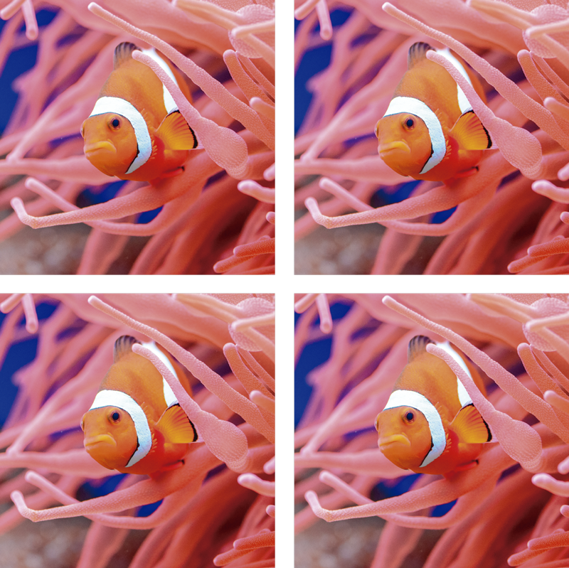 TenStickers. Clownfish in the sea fish coaster. A Fabulous fish coaster that has a colorful clownfish swimming in the sea. Easy to keep clean. Choose the package size that you need.