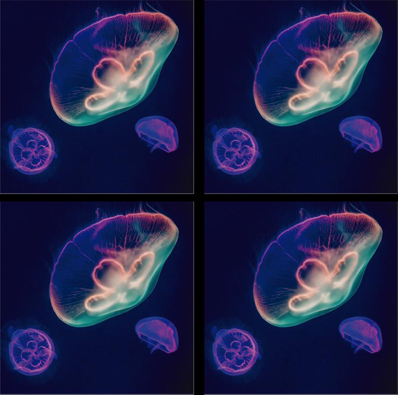TenVinilo. Posavasos medusas multicolores originales. Posavasos original y fabuloso que tiene medusas multicolores con un fondo oscuro. Producto de primera calidad ¡Envío a domicilio!