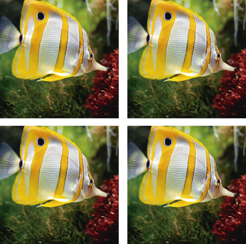 TenStickers. White and yellow fish coaster. Awesome fish coaster that has a yellow and white fish swimming in clear water. Easy to keep clear. Waterproof. Top-quality.