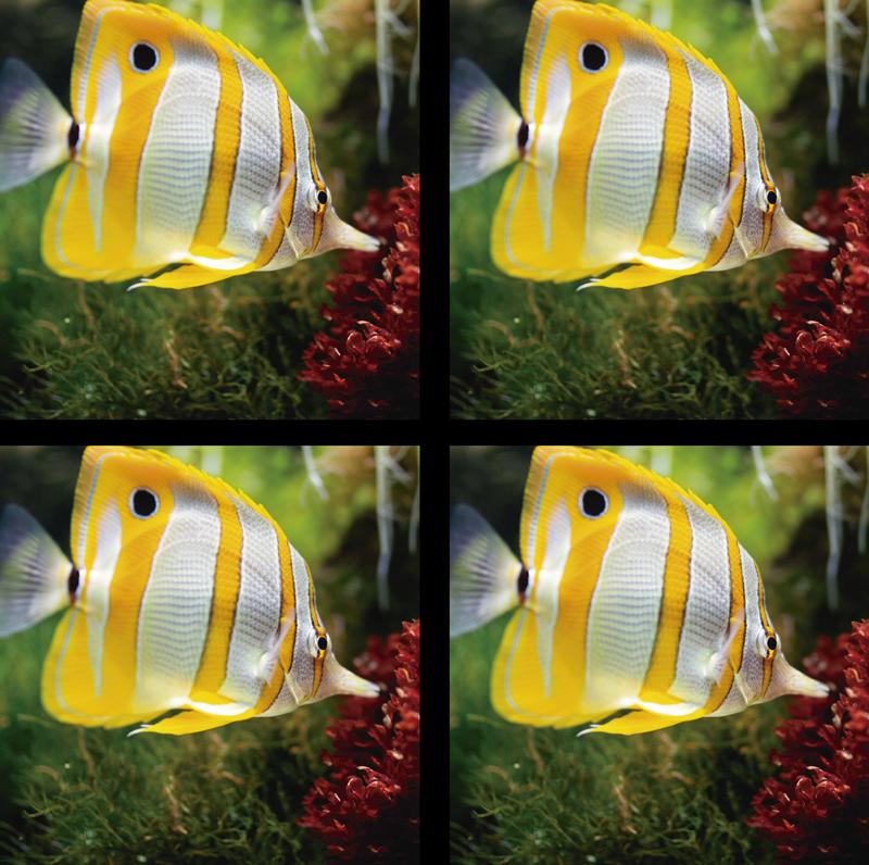 TenVinilo. Posavasos de peces blanco y amarillo. Impresionante posavasos de peces que tiene un pez amarillo y blanco nadando en aguas claras. Fácil de mantener ¡Envío a domicilio!