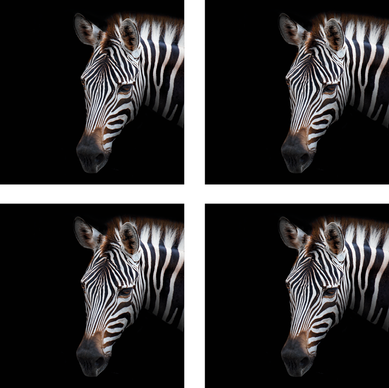 TenStickers. Zebra Picture zebra coaster. All your guests will be amazed and you will be able to proudly show off your new decoration that everyone will envy you.