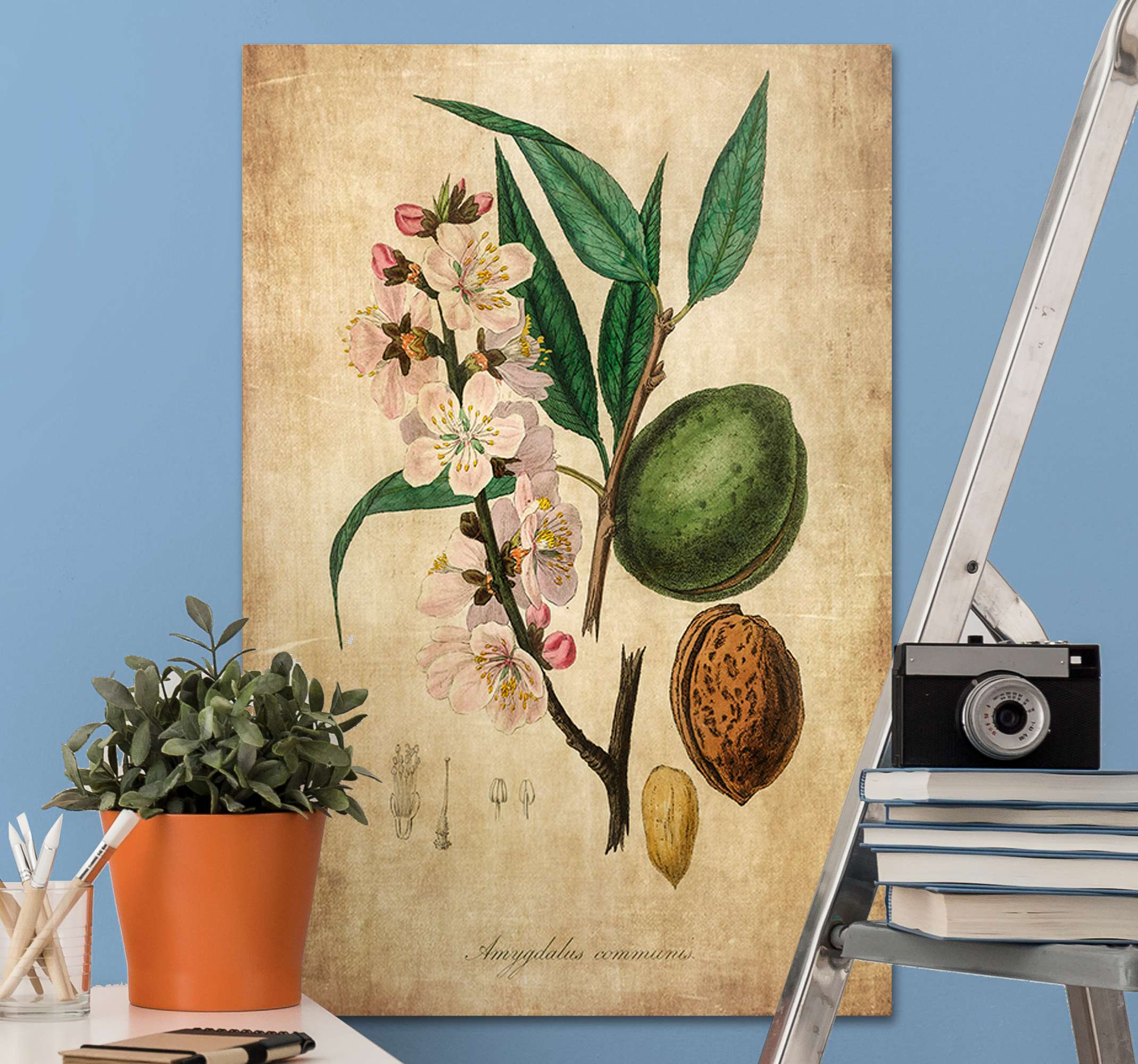 TenStickers. Almond Master bedroom canvas wall art. Almond canvas wall art to decorate your home and any other space of your choice. This vintage texture tree canvas art is original and  durable.