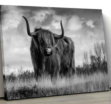 Animal canvas print for wild life animal lovers. A black and white highland cattle animal canvas print illustrated to be on the grassland.