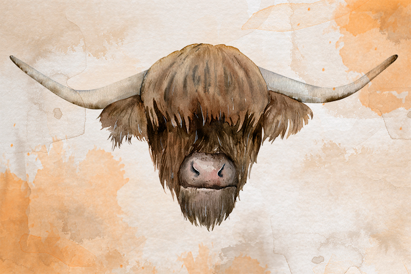 TenStickers. highland cattle animal canvas. The best highland cattle animal wall art canvas for you home to give a modern look. Discounts available now on our website.