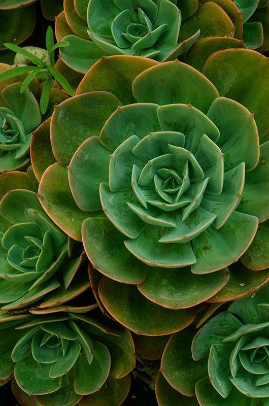 TenStickers. Kaktus design plante lærredstryk. Realistisk udseende kaktus blomst lærred væg kunst. Smukt lærred til en stue, selvom du også kan hænge det på andre områder i dit hjem.