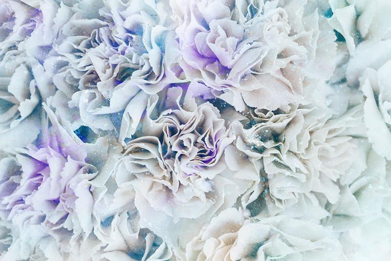 Tenstickers. Elegantes flores blancas sofistikované plagáty. Ohromte svojich blízkych a návštevníkov týmto úžasne krásnym zasneženým bielym lesným plátnom, o ktorom si myslíme, že bude vo vašej domácnosti vyzerať skvele!
