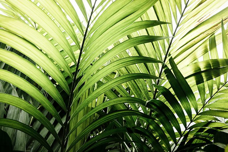 Tenstickers. Triptyykki kasvit viidakon lehdet kasvi canvastaulu. Joukko viidakon kasvien kangas seinätaidetta. Tämä kaunis havainnollistava trooppinen loma-kangas sopii koristamaan minkä tahansa kodin ja toimiston tilan.