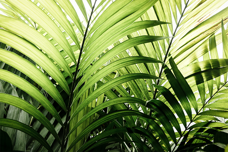 TenStickers. 三联画丛林叶子植物壁画. 一套丛林植物帆布墙艺术。这种美丽的热带假画布艺术作品适合装饰家庭和办公室中的任何空间。
